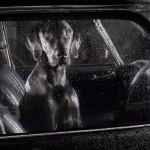 Cão no Carro 02