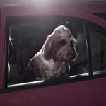 Cão no Carro 01
